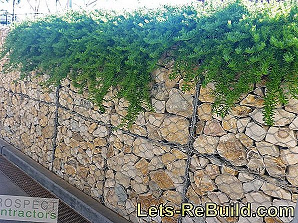 Gabions and plants