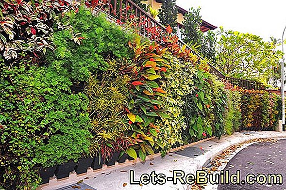 Greening the garden wall - that's the way it works best