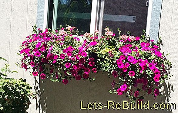 Balcony flowers - flower box planting step by step