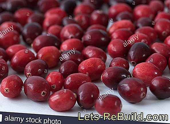 Cranberry (Vaccinium macrocarpon) - Healthy berries and juices