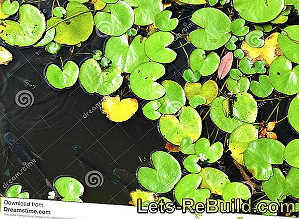 Swimming leaf plants - floating plants