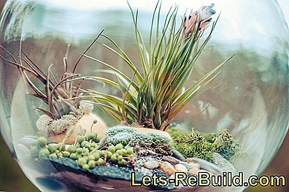 Florarium: Make mini terrarium yourself with moss, cacti and succulents