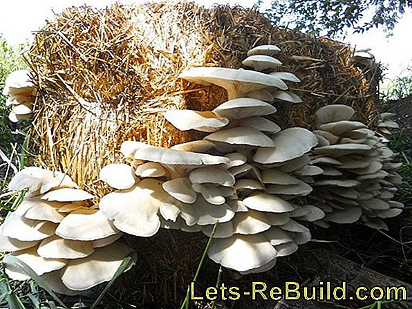 Growing Mushrooms - Mushroom Cultivation In The Home Garden
