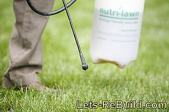 Lawn Fertilizer With Weed Killer Comparison 2018