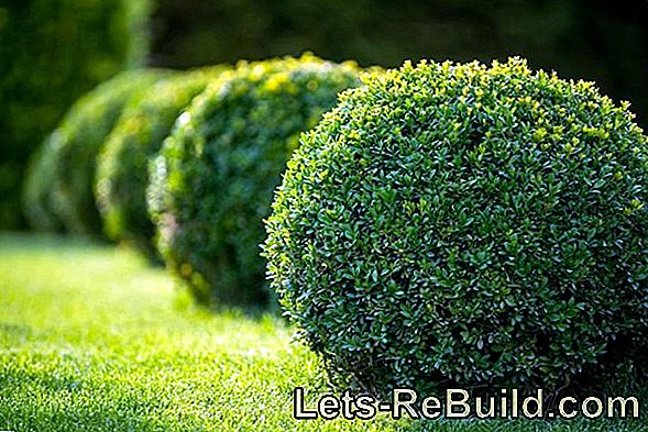 Plant And Cultivate Popular Hedge Plants For Your Home Garden