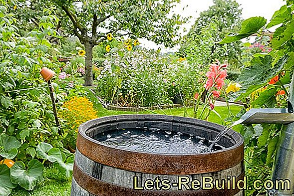 Collect Rainwater: Rain Barrel For Garden Irrigation