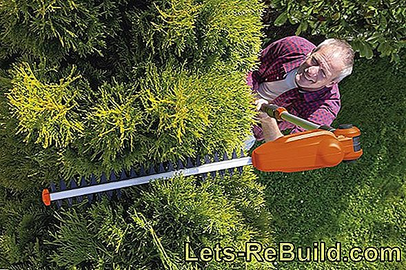 Telescopic Hedge Trimmer Comparison 2018