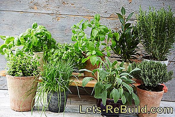 Herb Garden: Grow Herbs
