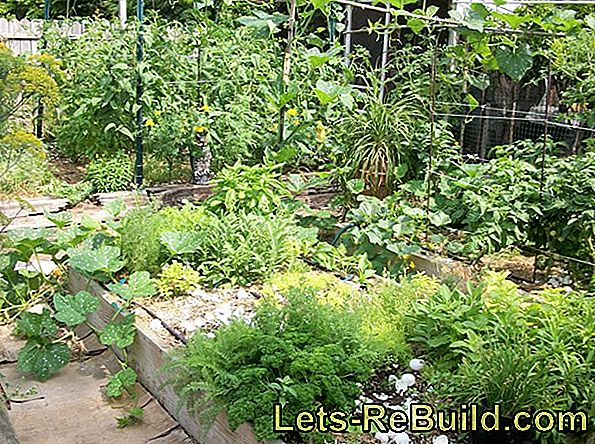 Herbal Beds: Plant Herbs In The Garden