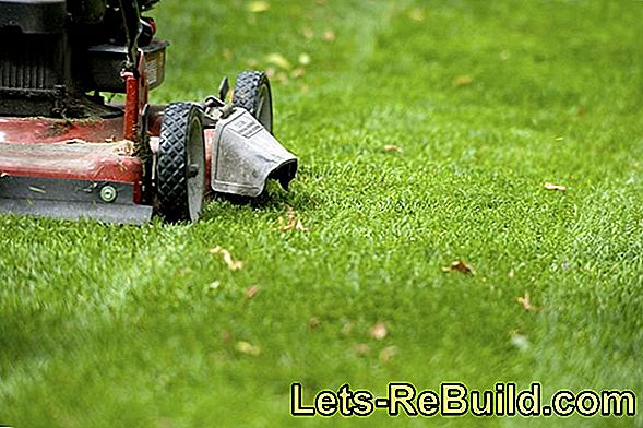 Mowing the lawn: the right lawnmower for your lawn