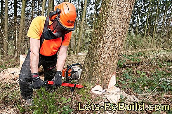 Chainsaw and chainsaw: Heavy equipment against trees in the garden