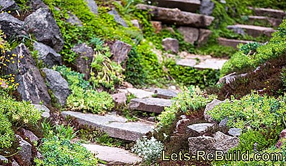 Plants For Rockeries