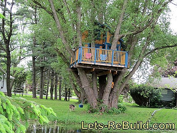 Build and set up a tree house