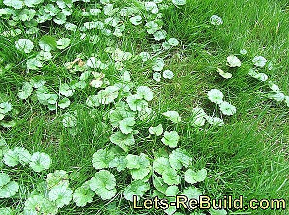 Weeds In The Grass: The Right Lawn Care For Wild Plants