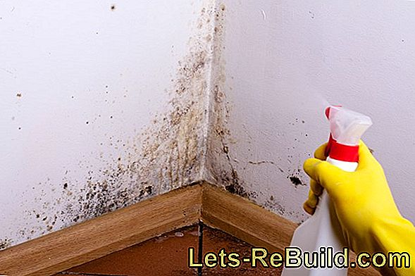 Mold Remover And Mold Repellent