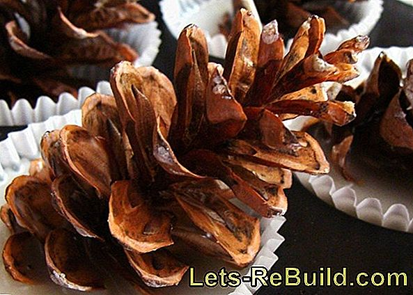 Pine Cones As A Fireplace Lighter