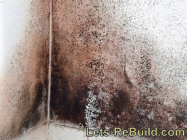 Black Mold In The House - Remove Causes
