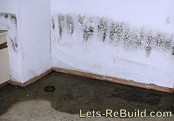 Mold On The Window Joints » Causes & Measures