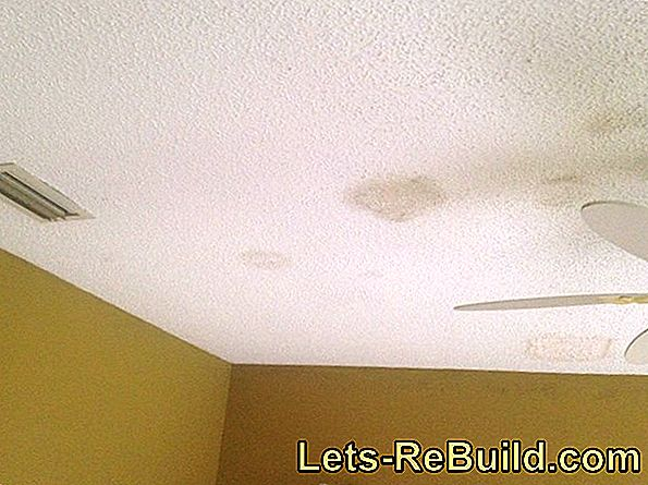 Mold On The Ceiling » Causes & Measures