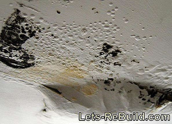 Mold on the wall - what types occur?