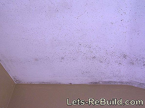 Mold in the apartment and who is to blame?