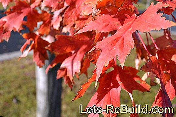 Paving Stones Fall Foliage As Eco-Plaster - Tips To Buy