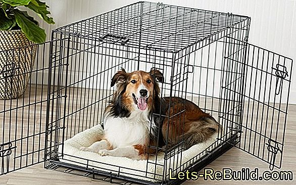 Kennel Comparison 2018