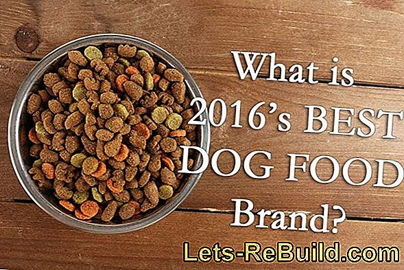 Grain Free Dog Food Comparison 2018