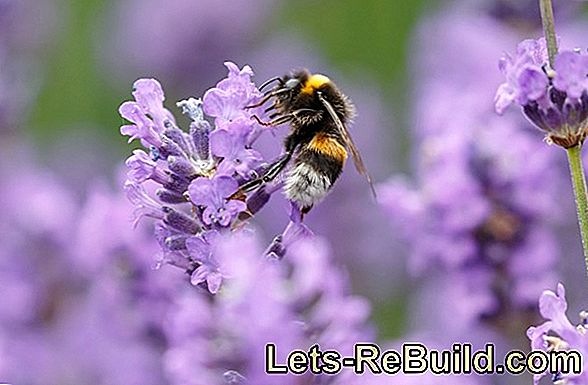 Bees Keep In The Garden - Tips For Amateur Beekeepers