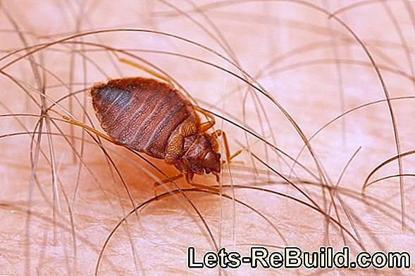 Mites Fight - Tips Against Dust Mites, Grass Mites And Spider Mites