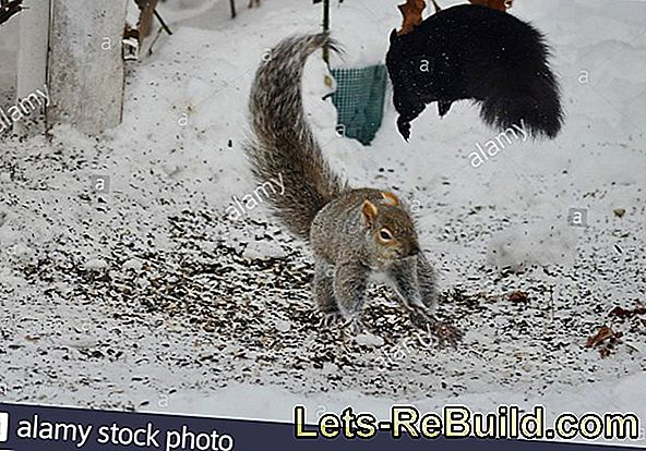 Feed Squirrels In Winter