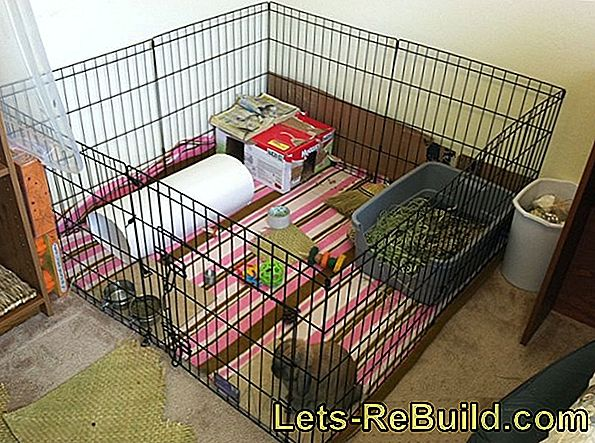 Build Stable For Small Animals: A New Home For Rabbits And Guinea Pigs