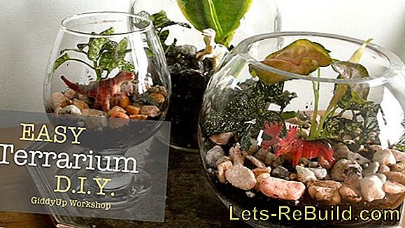 Build the terrarium yourself