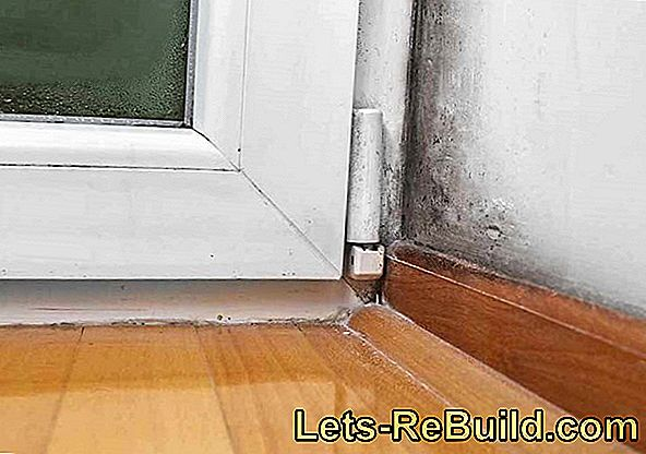 Mold Remediation » List Of Costs