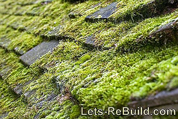 Moss On The Roof » The 4 Best Cleaning Methods