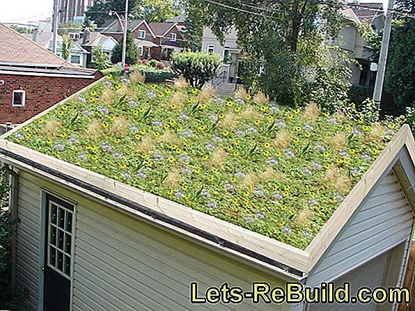 Greening The Garage Roof » Variants & Requirements
