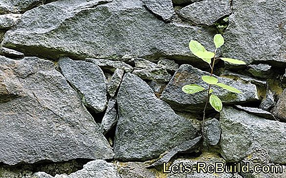 Plant Stone Wall » Tips & Hints For Selecting Plants