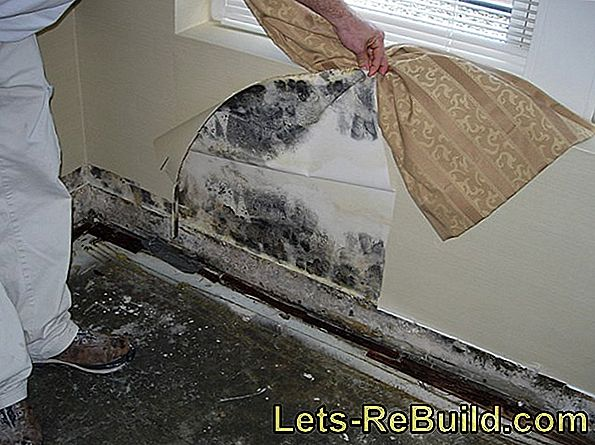 Harmful mold after water damage