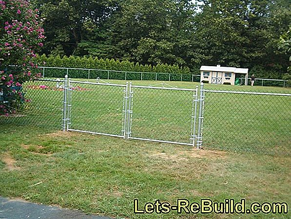 Greening The Wire Mesh Fence » This Is How You Plant It