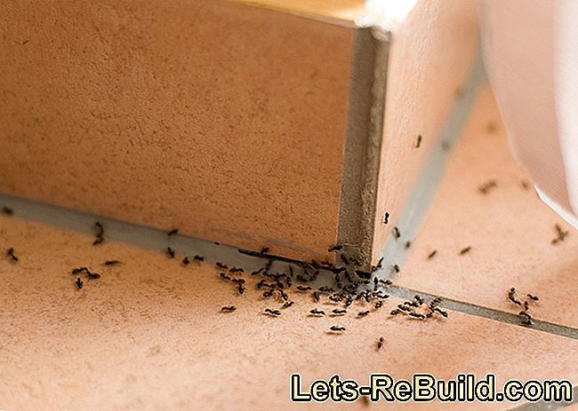 Lime Against Ants » How To Use It Successfully