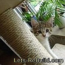 Scratching post construction manual: manual
