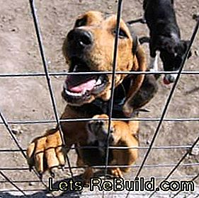 Build dog kennels: kennel